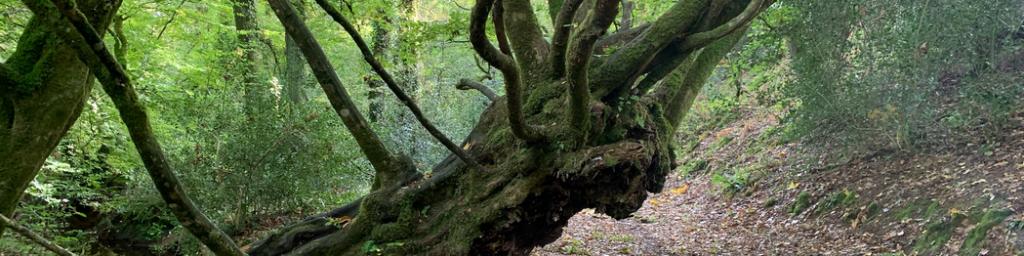 Arbre en forêt
